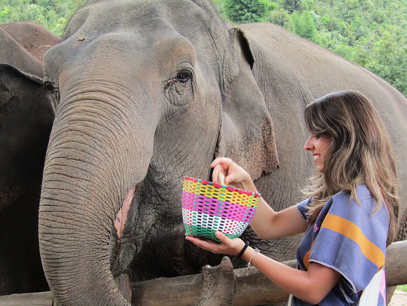 Blue Daily Elephant Care (Chiang Mai, Thailand) – Brochure, Tour Info, Price & Reviews