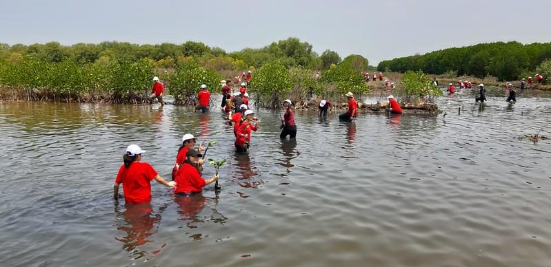 Menanam Mangrove di Pantai Muara Gembong Bekasi