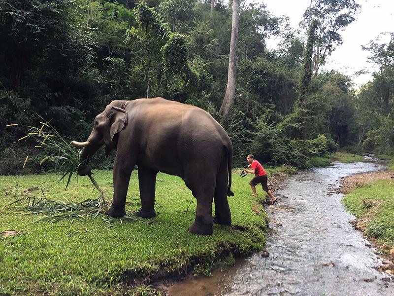 De'Kashor Elephant Home & Hill Tribe Village (Chiang Mai, Thailand) – Brochure, Tour Info, Price & Reviews