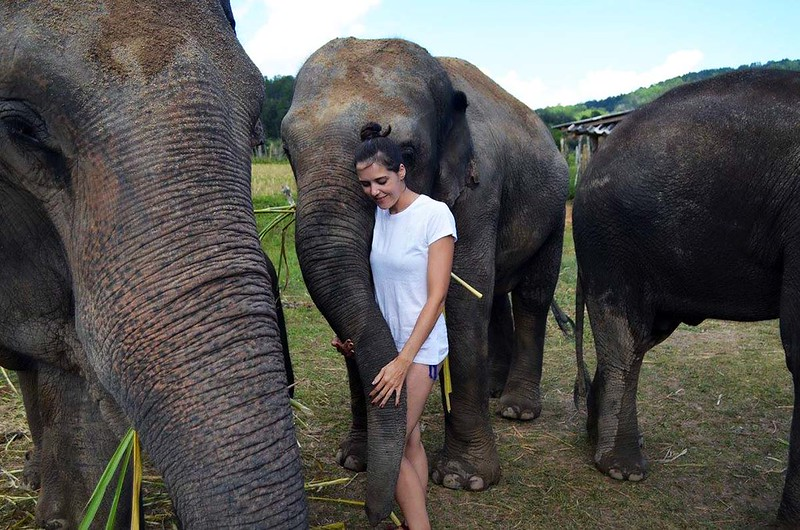 Dumbo Elephant Spa (Chiang Mai, Thailand) – Brochure, Tour Info, Price & Reviews