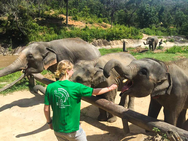 Elephant Care & Grand Canyon Jumping (Chiang Mai, Thailand) – Brochure, Tour Info, Price & Reviews