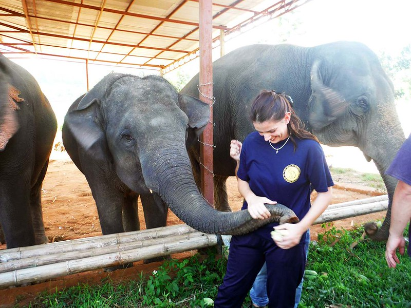 Eddy Elephant (Chiang Mai, Thailand) – Brochure, Tour Info, Price & Reviews