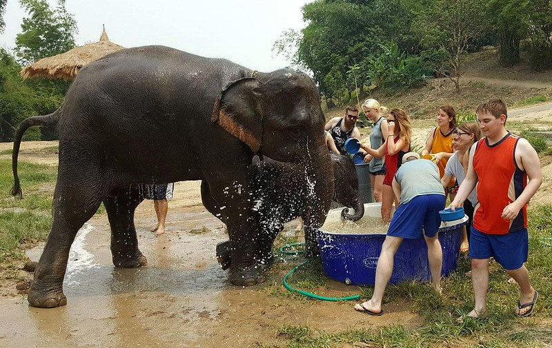Elephant Retirement Park (Chiang Mai, Thailand)