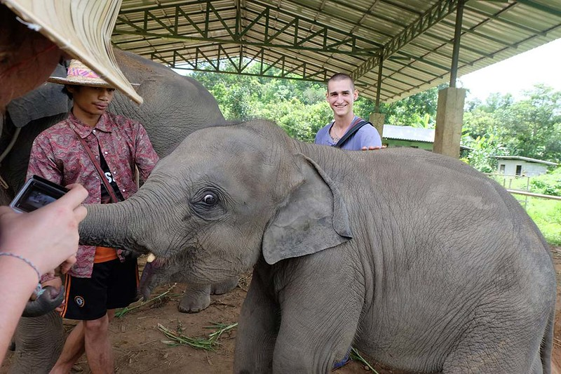 BMP Farmhouse – Elephant Care Project (Chiang Mai, Thailand) – Brochure, Tour Info, Price & Reviews