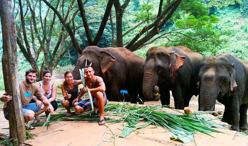 The Chiangmai T.U.M Travel – Elephant Trekking Care – Brochure, Tour Info, Price & Reviews
