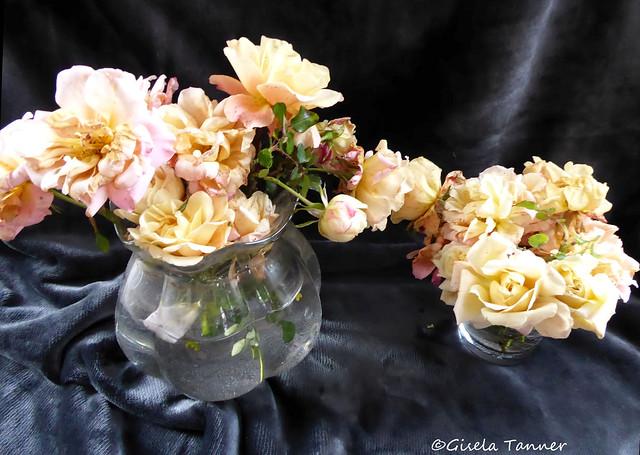 Letzte Rosen aus dem Garten