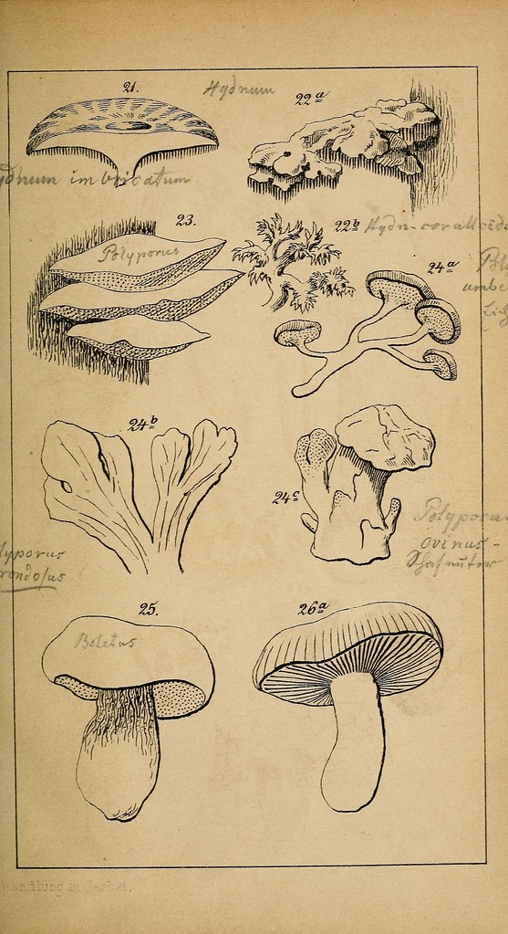 Fungi – Upside down drawing - image 2 - student project