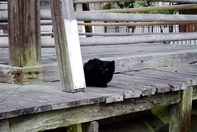 Today's Cat@2019-12-02