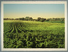 Farm Landscape #2