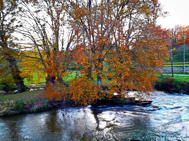 Le chêne près de la rivière.