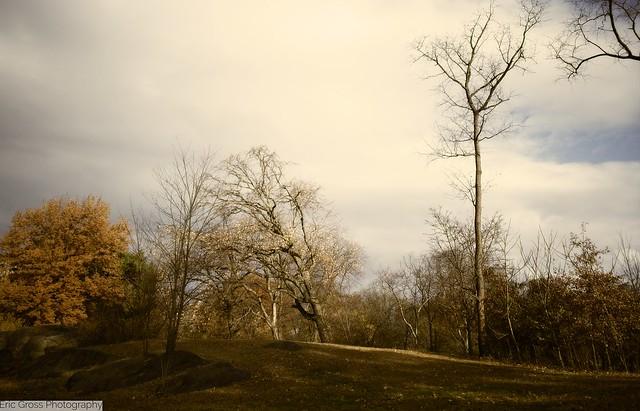 Autumnal Scene in Central Park