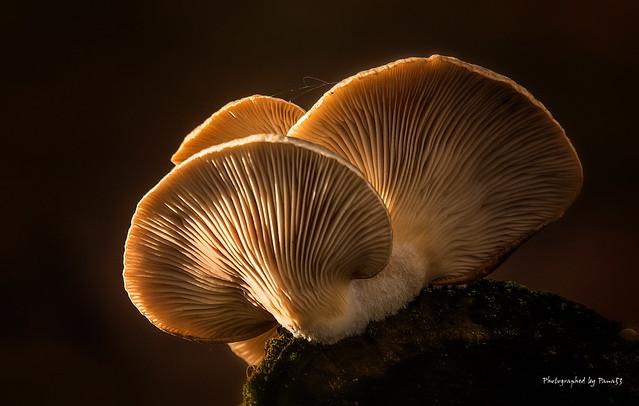 Pilze - Fungi - Mushrooms - Koralle
