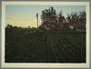 Farm Landscape V