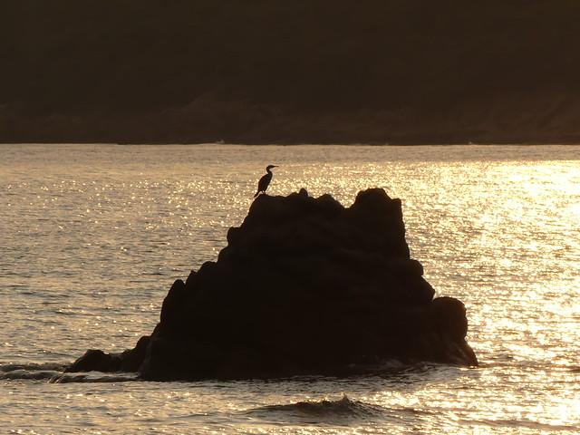 ... Il Cormorano a guardia della baia ...Tramonto sulla Baia di Cupabia. Corse 2019.