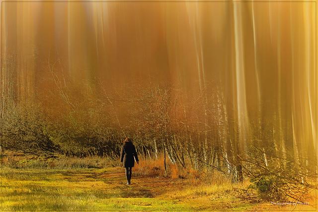 Pietzmoor - Sun walk