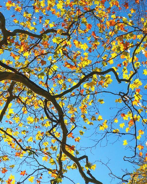 bunter Herbstzauber
