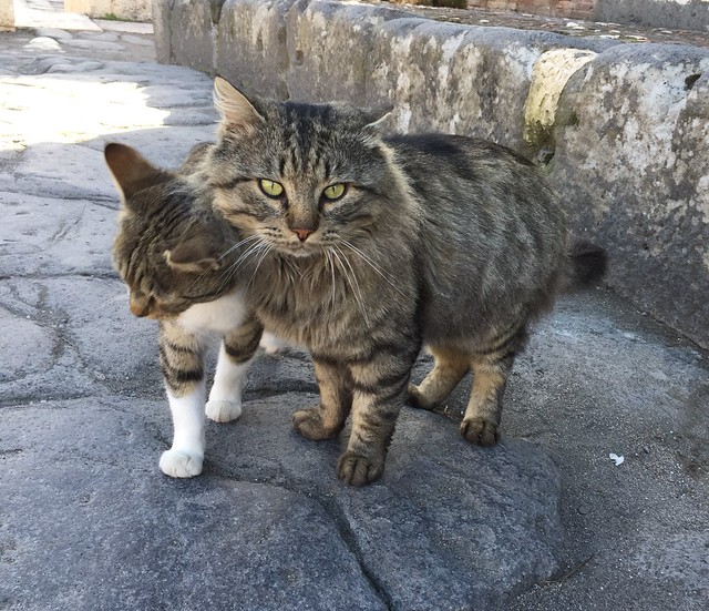 Two awesome kitties on the old streets of Pompeii, Italy!