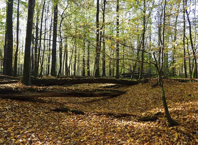 October in primeval forest