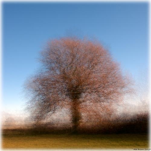 tree impression impressionist intheround pepventosa stephendagostino affinityphoto panasonicg6 sigma sigma19mmf28dn