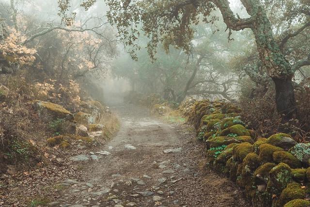 Camino con niebla  291119-1728