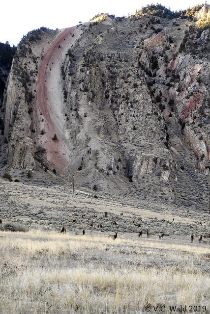 Elk herd before Devil's Slide