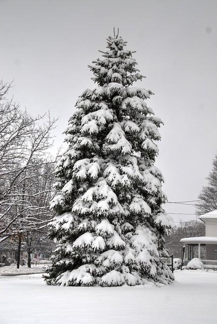 Snowy Phelps NY