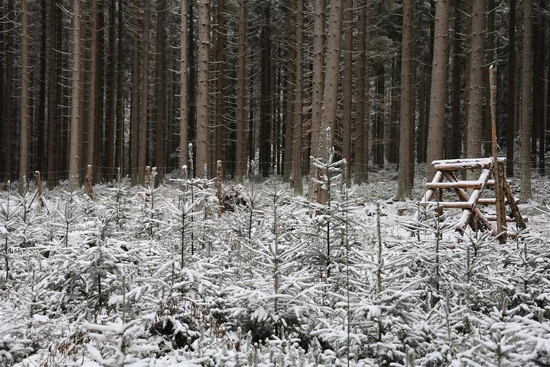 Oplocenky v zimě 2 • Forestis Gallery