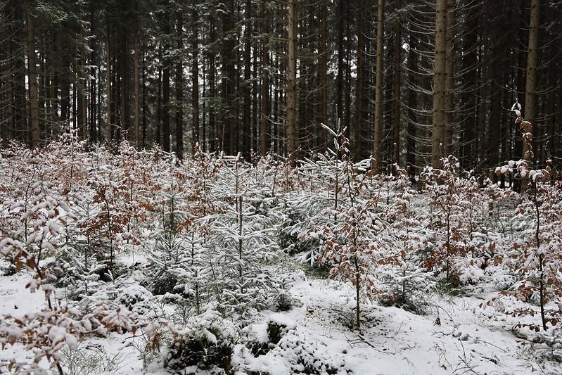 Oplocenky v zimě 3 • Forestis Gallery
