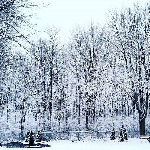 Wintry scene behind my house #snow #nature #almostwinter