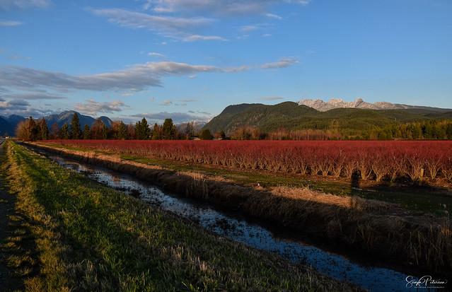 Pitt Meadows, BC