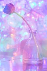 Tinsel Tulip