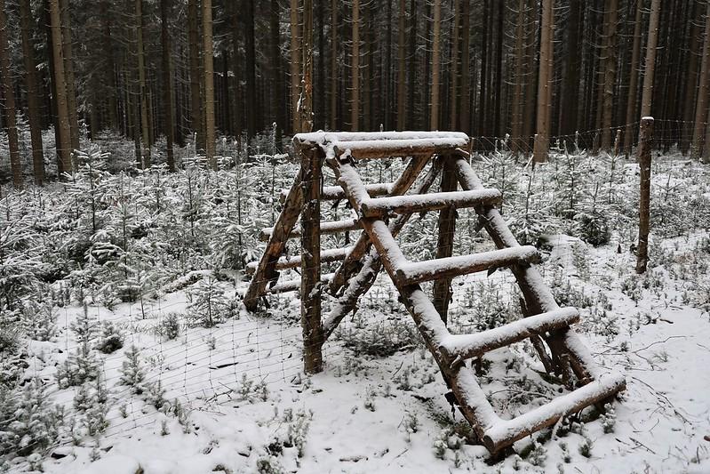Oplocenky v zimě • Forestis Gallery