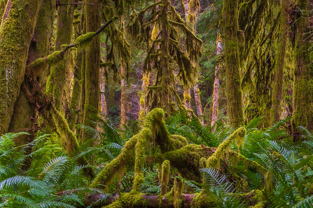 I love looking for compositions in the forest. Inland Lake near Powell River. BC. Canada.