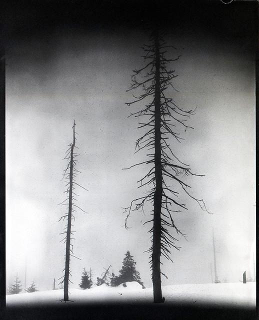 Schwarze Bäume