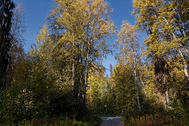 A Landscape Orientation to Trees in Talkeetna