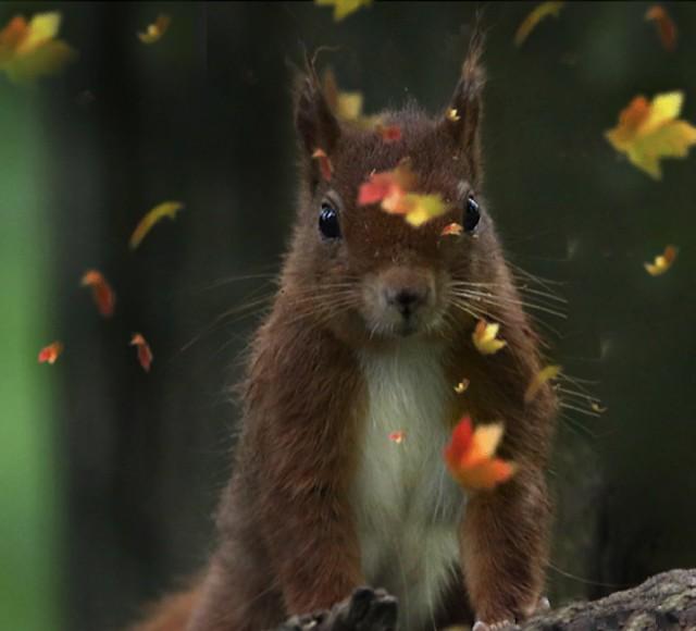 Letztes Herbstlaub