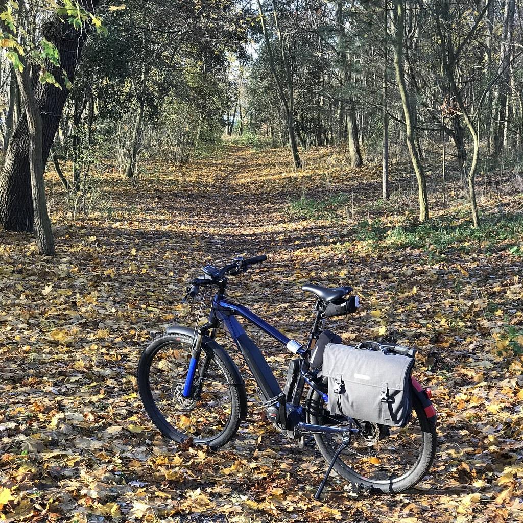 Velo dans le bois de Boulogne