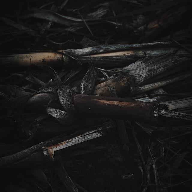 Ackergeschichten - Field Stories