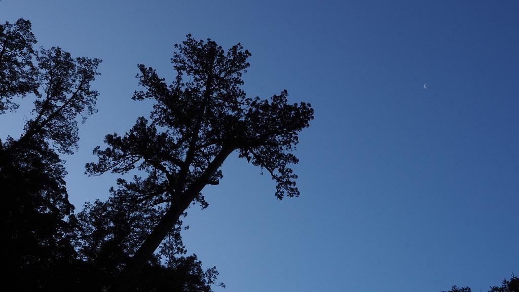 還差一點就撞到月亮的樹