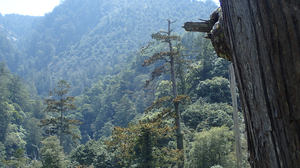 美麗的丹大、中央山脈核心區的巨木森林