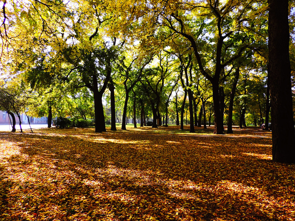 Autumn in Budapest City Park