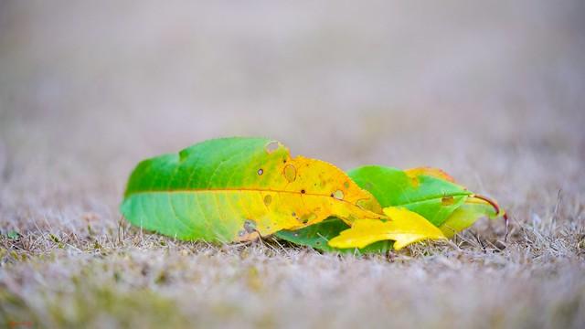 #Leaves - 7801