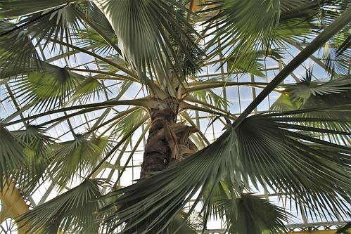 Rawlings Conservatory ~ 1888 Palm House
