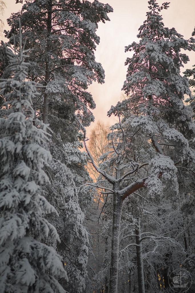 3 декабря 2019, Поездка на Левашовский полигон / 3 December 2019, Trip to Levashovsky landfill