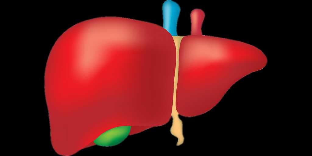 des-modèles-3D-du-foie-pour-un-meilleur-diagnostic