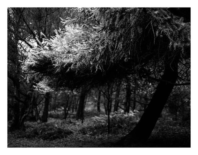 FILM - Evergreen