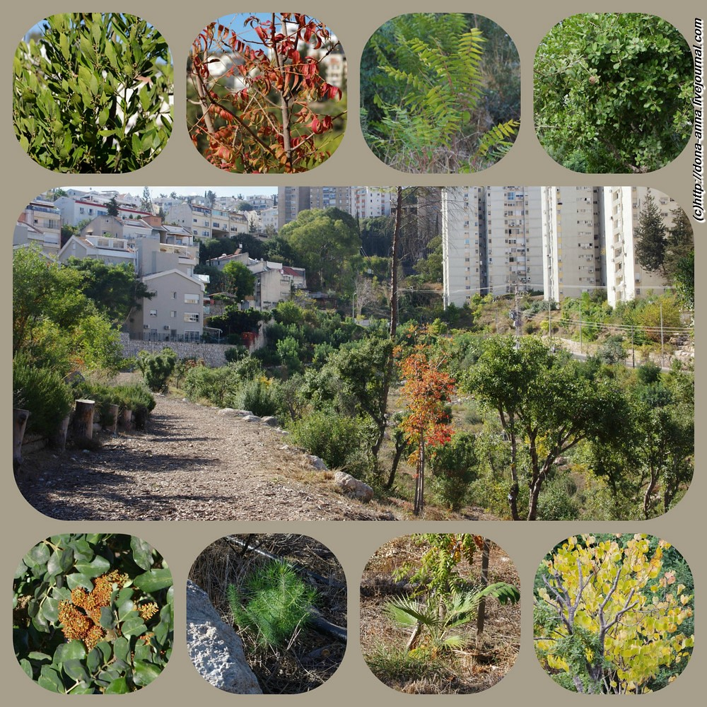 Givat-Oranim-collage-a
