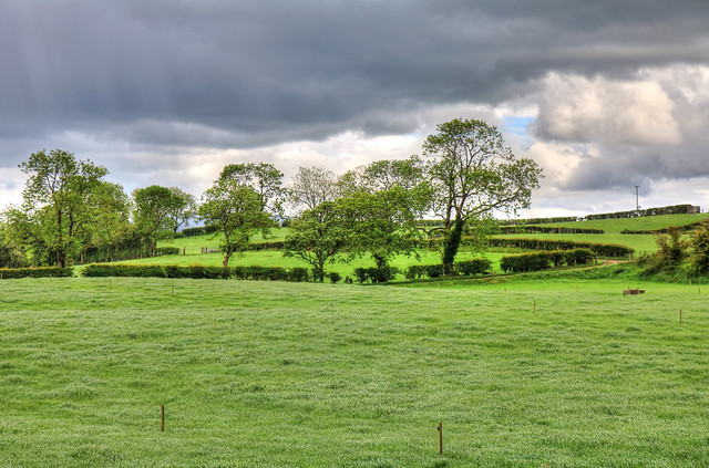 Bregagh Road NIR - Fields around Dark Hedges