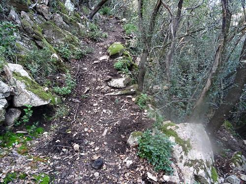 Le sentier d'U Chjassu di I Carbunari avec déjà des dégâts de sangliers