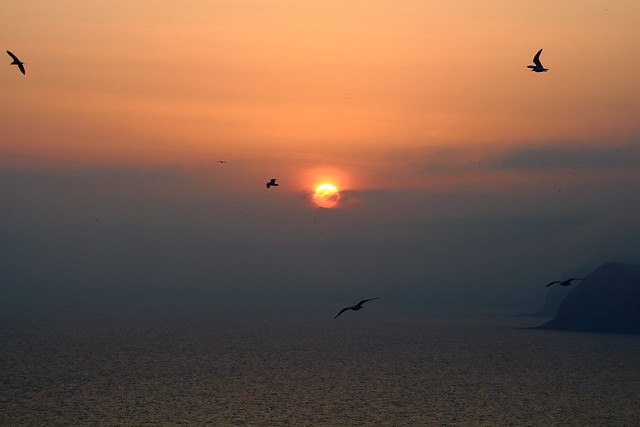 From the bird eye
